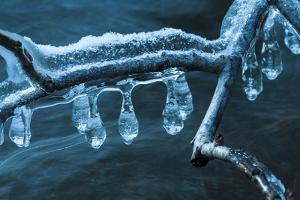 Ice Clinging On Branch In Creek by Anthony Paladino
