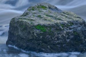 The Rock by Anthony Paladino