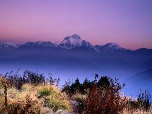 Sunrise over Mountains with Plants in Foreground, Poon Hill, Gandaki, Nepal by Anthony Plummer