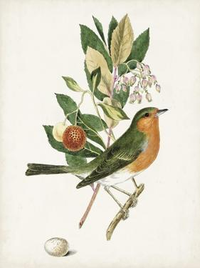 Antique Bird, Botanical & Egg I by 0 Unknown