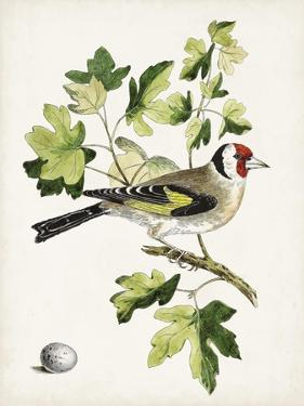 Antique Bird, Botanical & Egg III by 0 Unknown