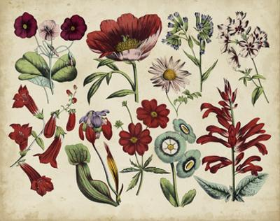Antique Botanical Chart I