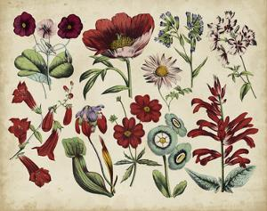 Antique Botanical Chart I