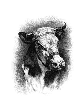 Antique Cattle I