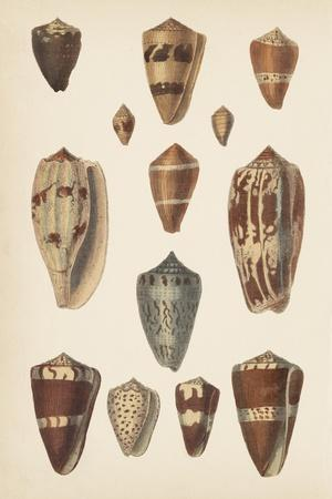 https://imgc.allpostersimages.com/img/posters/antique-cone-shells-ii_u-L-Q11K11C0.jpg?artPerspective=n
