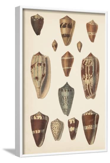 Antique Cone Shells II--Framed Art Print