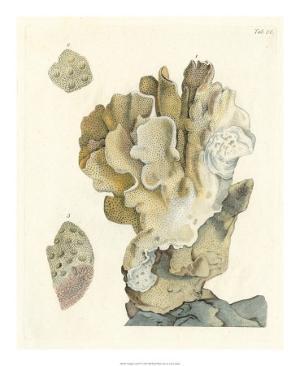 Antique Coral IV