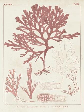 Antique Coral Seaweed II