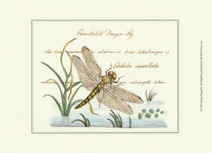 Antique Dragonfly I