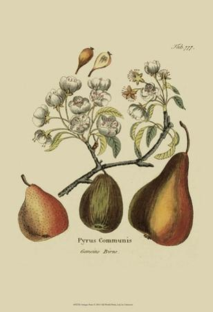 Antique Pears