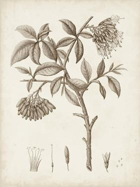 Antique Sepia Botanicals I by 0 Unknown