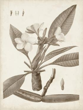 Antique Sepia Botanicals II by 0 Unknown