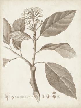 Antique Sepia Botanicals IX by 0 Unknown