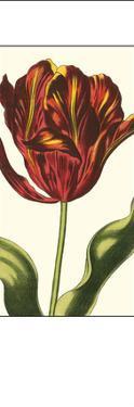 Antiqued Tulip Panel I