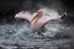 Bathing Fun by Antje Wenner-Braun