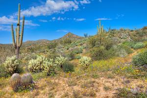 Blooming Desert by Anton Foltin