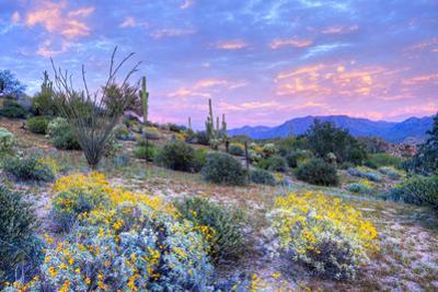 Desert by Anton Foltin