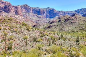 Organ Pipe Cactus National Monument by Anton Foltin