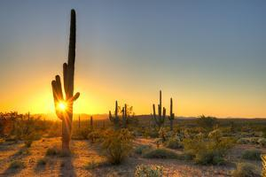 Sonoran Desert Catching Day's Last Rays. by Anton Foltin
