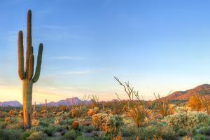 Sonoran Desert Catching Days Last Rays. by Anton Foltin