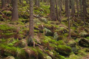 Beautiful Mysterious Forest with Large Mossy Stones by Anton Petrus