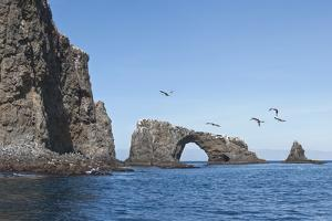 Anacapa Arch with Birds, Channel Islands National Park, California, United States of America by Antonio Busiello