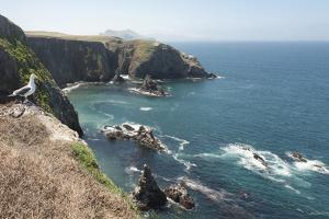 Gull Looking over the Ocean, Anacapa, Channel Islands National Park, California, USA by Antonio Busiello