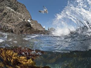 Underwater Photo of Anacapa Arch, Kelp and Birds, Channel Islands National Park, California, USA by Antonio Busiello