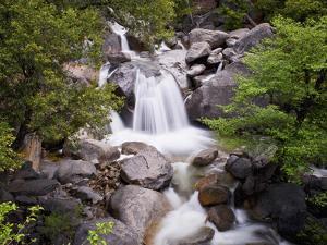 Waterfall in Woods, Yosemite National Park, UNESCO World Heritage Site, Yosemite, California, USA by Antonio Busiello