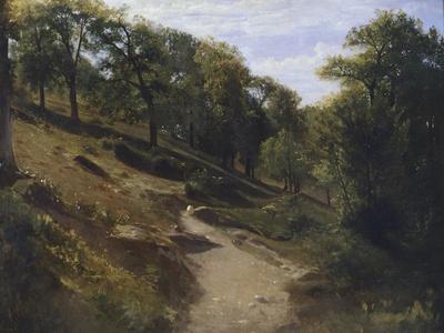 Path Through Chestnut Trees