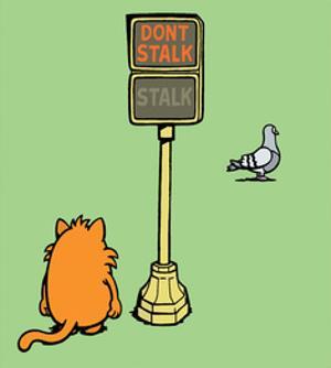 Dont Stalk- Stalk - Antony Smith Learn To Speak Cat Cartoon Print by Antony Smith