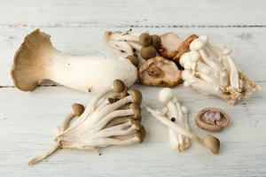Assorted Edible Mushrooms on a Vintage White Table by Anyka