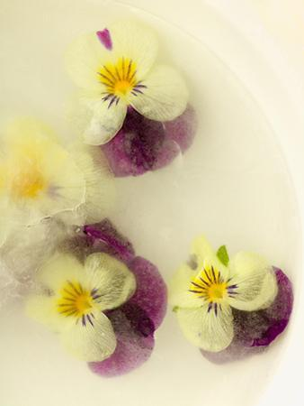 Bowl Filled with Frozen Water and Little Violets by Anyka