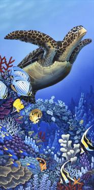 Flight of the Sea Turtle by Apollo