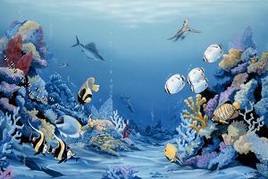 Reef Delight by Apollo