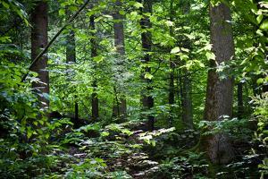 Appalachian Trail Massachusetts Forest Landscape Plastic Sign
