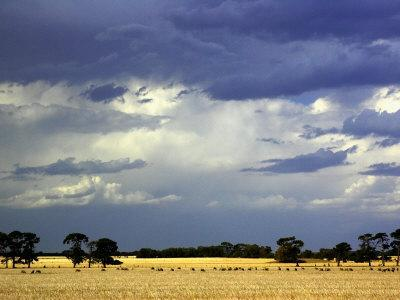 https://imgc.allpostersimages.com/img/posters/approaching-storm-near-geelong-victoria-australia_u-L-P2T98A0.jpg?p=0