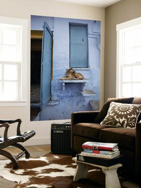 Dog Resting on Step Leading to Doorway by April Maciborka