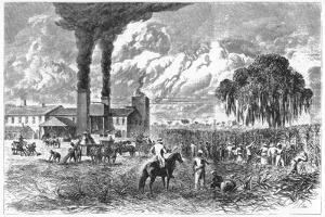Sugar Plantation, New Orleans, 1870 by AR Ward