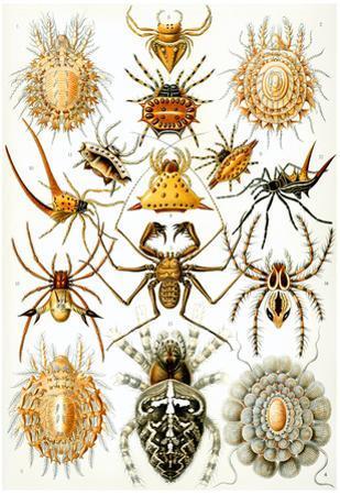 Arachnida Nature Art Print Poster by Ernst Haeckel