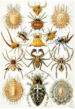 Arachnida Nature Art Print Poster by Ernst Haeckel