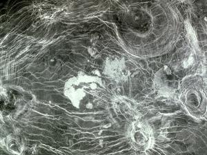 Arachnoid Volcanoes on Venus