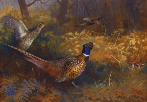 A Cock and Hen Pheasant at the Edge of a Wood by Archibald Thorburn
