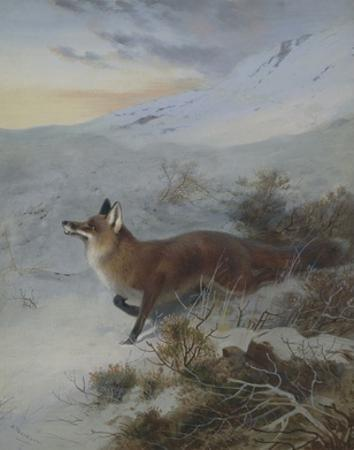 A Fox in a Winter Landscape by Archibald Thorburn