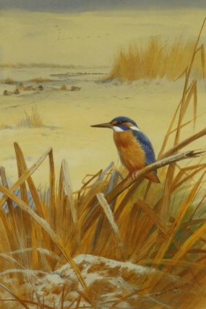 A Kingfisher Amongst Reeds in Winter, 1901 by Archibald Thorburn