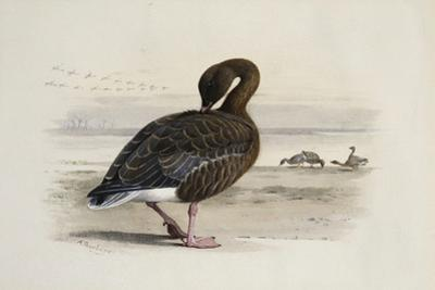 A Pink-Footed Goose by Archibald Thorburn