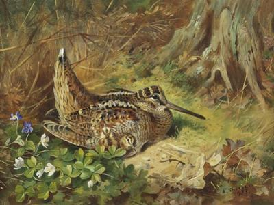 A Woodcock and Chicks, 1933 by Archibald Thorburn