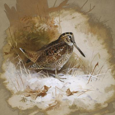 A Woodcock by Archibald Thorburn