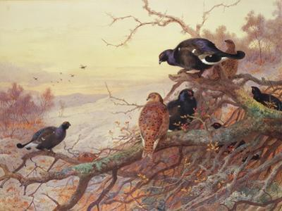 Blackgame in Winter by Archibald Thorburn