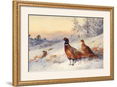 Cock and Hen Pheasant in Snow by Archibald Thorburn